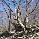 drevo na škarpi