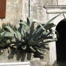 na vhodu v stari del mesta