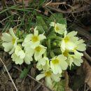pomlad je prišla v deželo