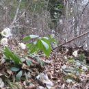 gozd je pobeljen s telohom