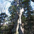 takšna drevesu so na razcepu, kjer se usmerimo proti valvazorju