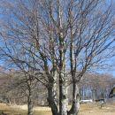 drevesa v