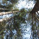 še čez borov gozd, pa sva nazaj v dolini