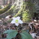 pomlad v gozdu