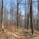 gozd je čedalje redkejši