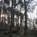 prijetna hoja po borovem gozdu proti vrhu ahaca