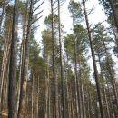 z ahaca po gozdu strmo navzdol