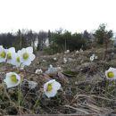 pred planino ravni se začne cvetna promenada...