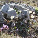 naravni skalnjak