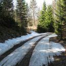 v gozdu še nekaj snega