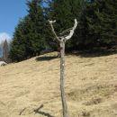 spet na planini travnik
