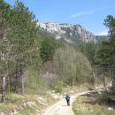 del poti po gozdni cesti
