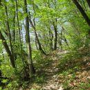 prijetna steza skozi sveže zeleno bukovje