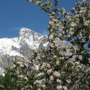 cvetoča pomlad v drežnici in zima na krnu