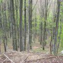 vračanje po gozdu strmo navzdol
