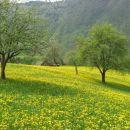travniki okoli čadrga žarijo v rumeni barvi!