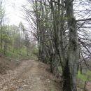 udobna hoja po drevoredu proti vasi krn