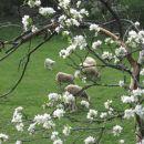 pogled skozi cvetoče veje
