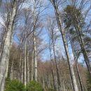 skozi pas listnatega gozda