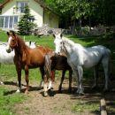 lepo negovani konji
