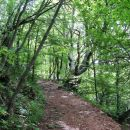 lepa steza skozi moker gozd