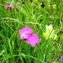 travniki so polni cvetja