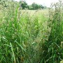 steza vodi čez visoko travo
