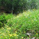 cvetoči travnik pri tilčevem rovtu