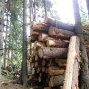 ...obvoz po gozdu nad debli