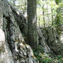 ogromna bukev, ki raste skoraj iz skale