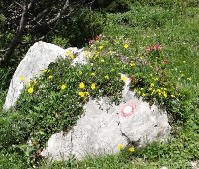 Tale skala je tako lepo oblečena, da jo je treba poslikat z vseh strani...