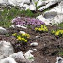 vrtički in skalnjaki vseh vrst...
