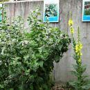 zeliščni vrt z opisi rastlin
