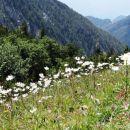 travnik ivanjščic na hajnževem sedlu