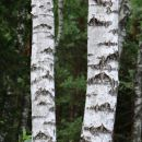 breze