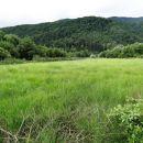 močvirnat travnik ob vodi