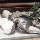 z macesnovo vejo, podobno kači