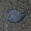 Kar na cesti ležijo... (Cerkniško jezero, 4.8.2014)