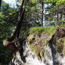 erozija - koliko časa bo drevo še obstalo?