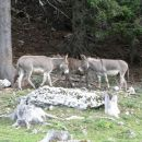 na planini imajo veliko živali...