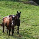mimo pašnika s konji