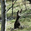 na povratku v gozdu srečava tole živalco