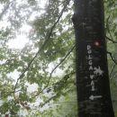 odcep za dolgo vas, kjer me je priplašil zvok, kot bi kdo ali nekaj skočilo z drevesa...