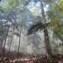 takoj je čisto drugo vzdušje v gozdu, saj je svetleje ...