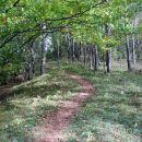 steza na ljubično je spočetka strma, nato položno mehka...