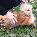 foxy se veseli obiskov