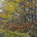 drevje v jesenski preobleki