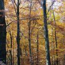skozi jesenski gozd k sv. kunigundi na goro