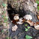 bazenček v drevesni duplini