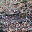 lesena bruna, ki so olajšala hojo čez blatne predele, je voda uničila